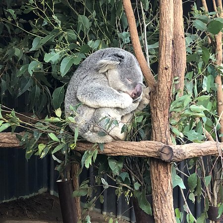 Lone Pine Koala Sanctuary: photo0.jpg
