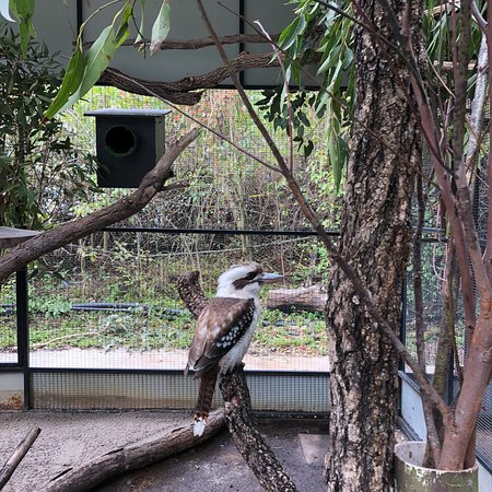 Lone Pine Koala Sanctuary: photo3.jpg