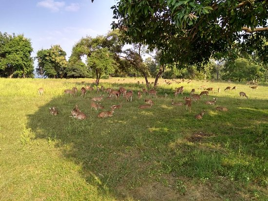 Satpura National Park, Indien: IMG_20181012_153455872_HDR_large.jpg