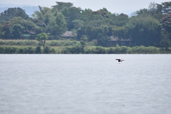 Waterwoods lodge and resorts Kabini: Photo showing backwaters