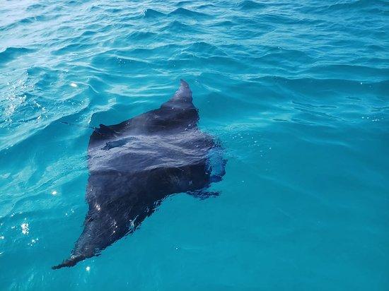 Mathiveri Island: IMG-20181008-WA0005_large.jpg
