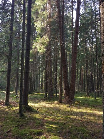 Kaluga Oblast, روسيا: дивный, разный и приветливый лес заповедника