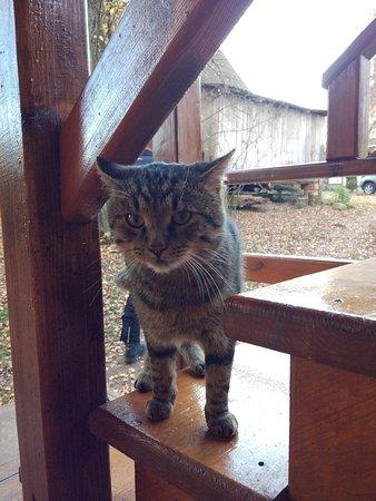 Kaluga Oblast, روسيا: житель агроусадьбы, ласковый кот, приветствует с прогулки