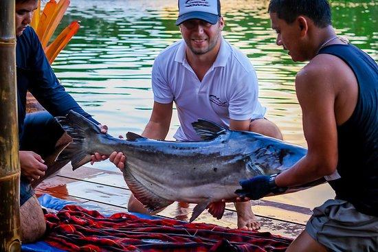 Rawai, Tailandia: Mekong catfish