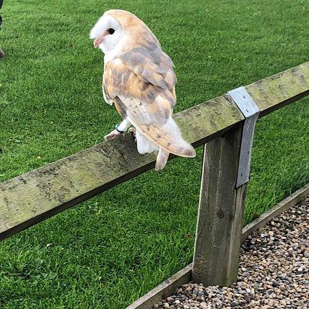 Falconry UK Thirsk Birds of Prey Centre: photo3.jpg