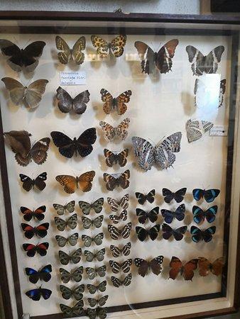 Bossolasco, Италия: esposizione di farfalle