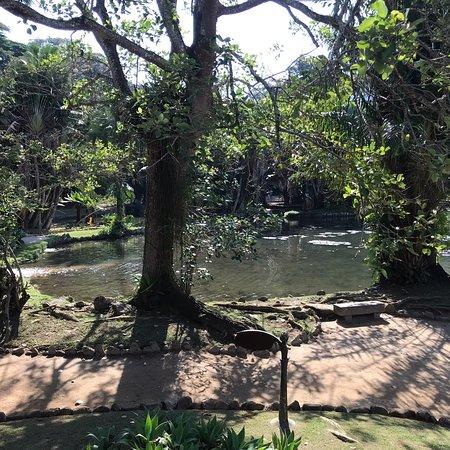 Jardim Botânico: photo7.jpg