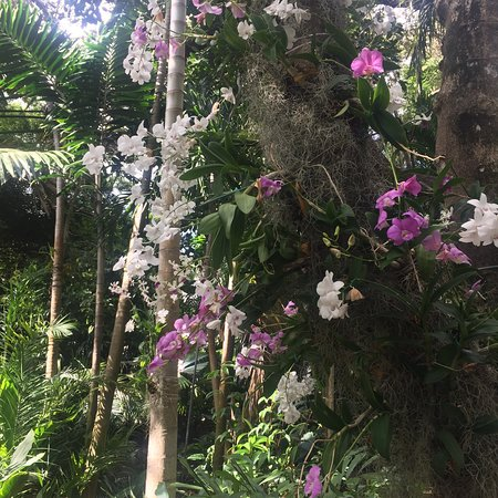 Fairchild Tropical Botanic Garden: photo1.jpg