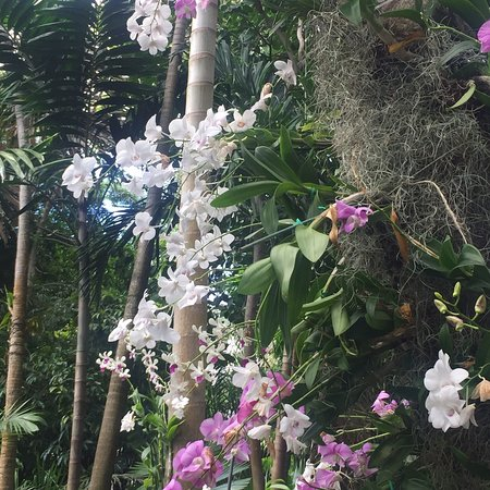 Fairchild Tropical Botanic Garden: photo2.jpg