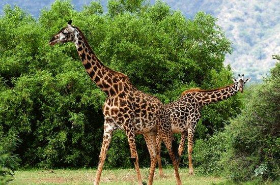 Africam Safari Zoo Entre med transport