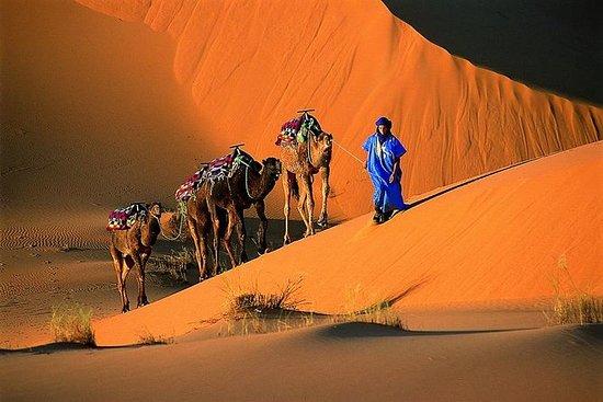 1 Night Camel Trek Bivouac From...