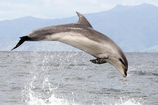 Ship Cove og Dolphin Eco-Tour Cruise