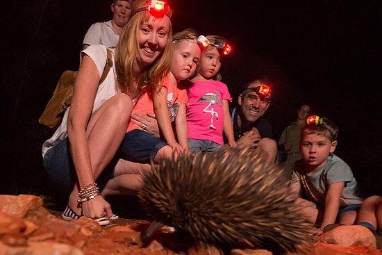 Alice Springs ørkenpark nattlig tur
