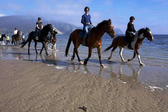 ゴールウェイからコネマラワイルドアトランティックウェイビーチ乗馬ライド