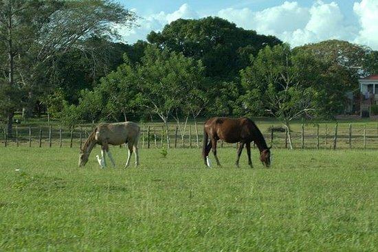 Landsby ridetur fra Belize by
