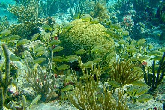 Snorkeling à 13:30 - Grand-Case