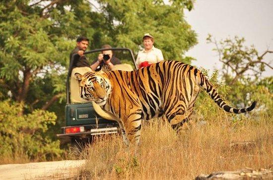 Two Night Wildlife Safari Experience...