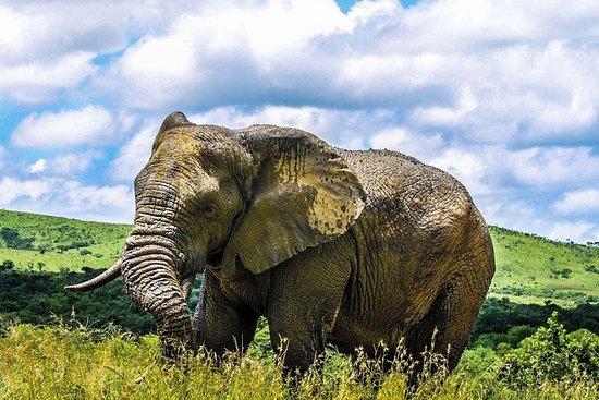 Hluhluwe Imfolozi Safari & St Lucia...