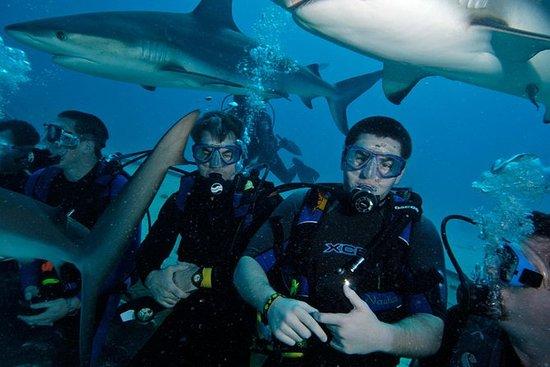 Haifischtauchen