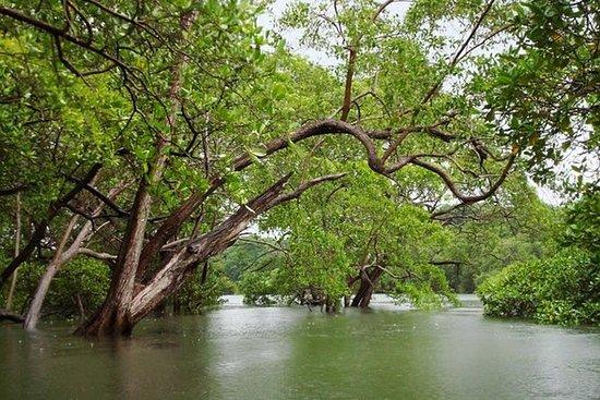 Tour de la mangrove de l'estuaire de...