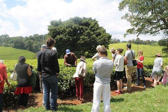 Excursión a la granja de té de...