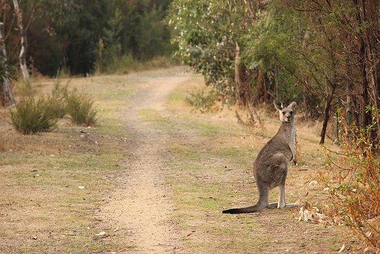 Guaranteed Animal Sighting tour
