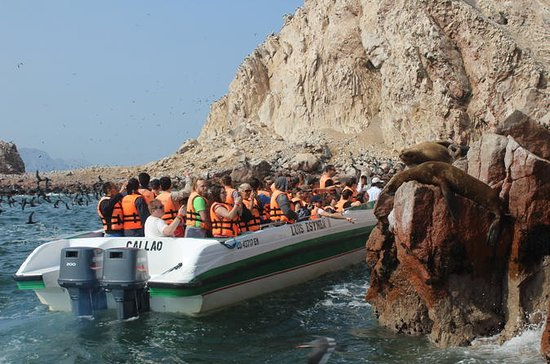 Ballestas Island Tour Sightseeing Boat