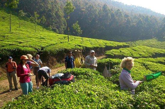 Trekking Tour in Munnar