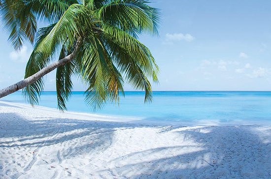Volle Grand Cayman Island Tour