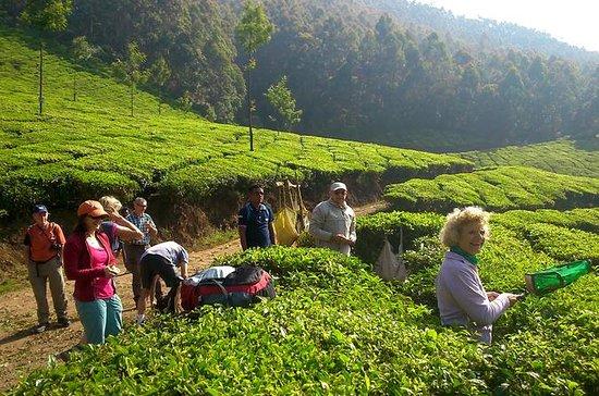 Kerala Cycle, Trek & Houseboat Tour