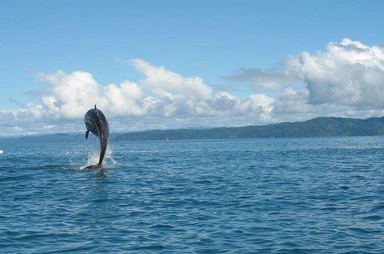 Observación de delfines en barco.