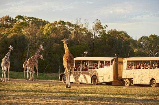 Sunset Safari på Werribee Open Range...