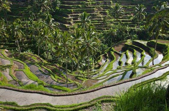 Bali: tour di giornata intera alla