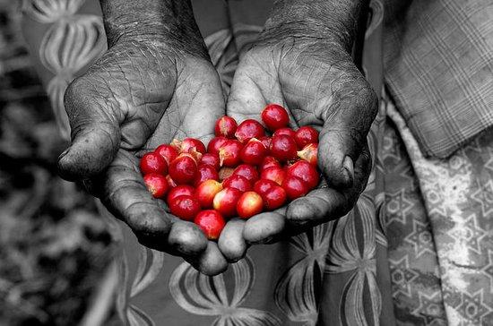 Expérience du café rwandais