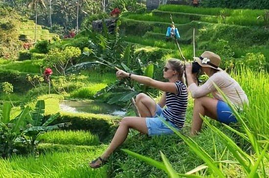 Bali in 1-Day: Temple, Waterfall...