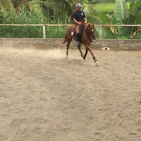 Ubud Horse Stables: photo0.jpg