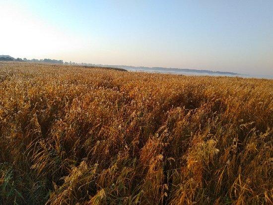 Dziwnowek, โปแลนด์: IMG_20181017_085327_large.jpg
