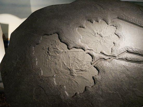 Wyoming Dinosaur Center: Giant Crinoid