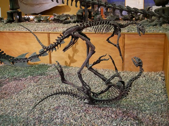Wyoming Dinosaur Center: Displays are well-composed!