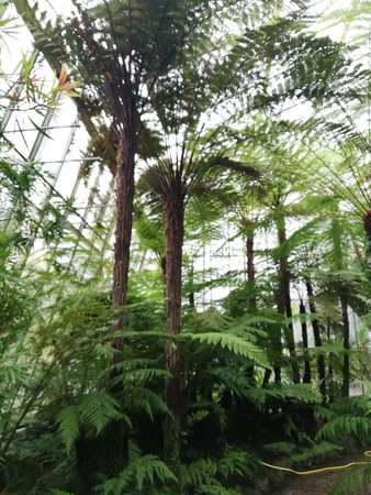 Royal Botanic Garden Edinburgh: Foto 23