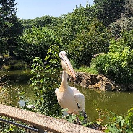 Parc de la Tete d'Or: photo1.jpg