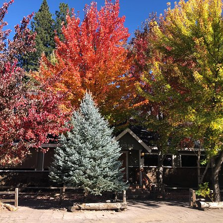 McCloud, Californië: Fall at the Shasta View Lodge