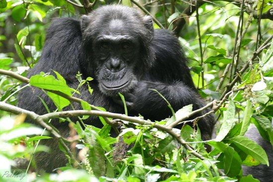 Kibale National Park照片
