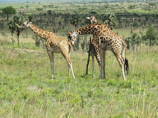 Inspire African Safaris, Entebbe, Uganda