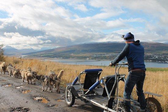 Inspiration Iceland: Husky Dog Kart