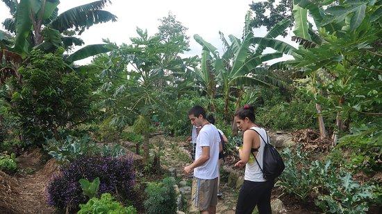 San Rafael, โคลอมเบีย: Organic Crops