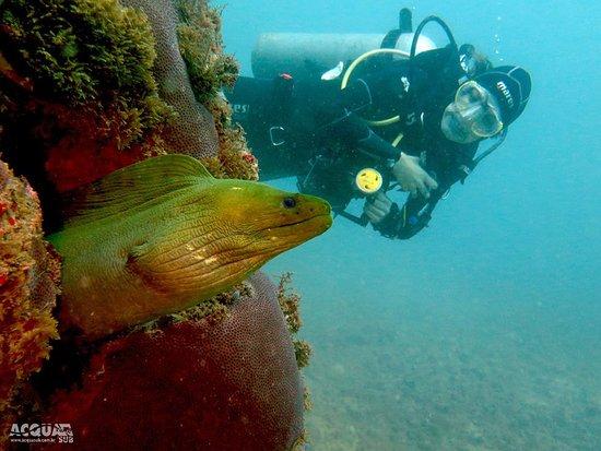 Acqua Sub Mergulho