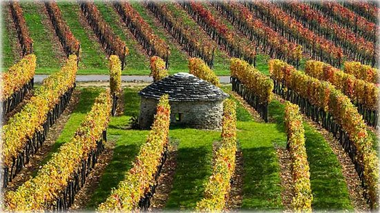 Borgoña, Francia: Vineyards in Burgundy, France