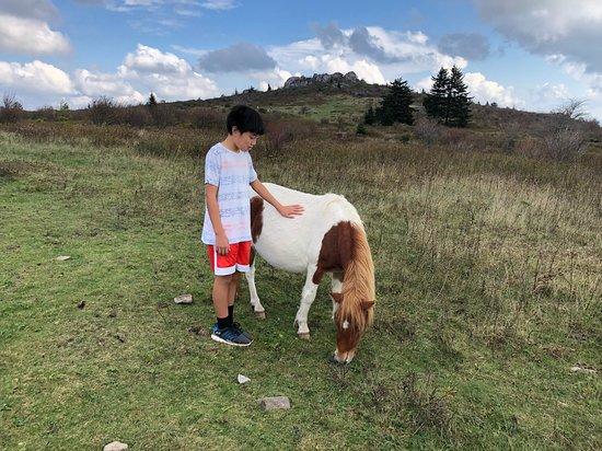 Mouth of Wilson, Βιρτζίνια: encounter of wild pony