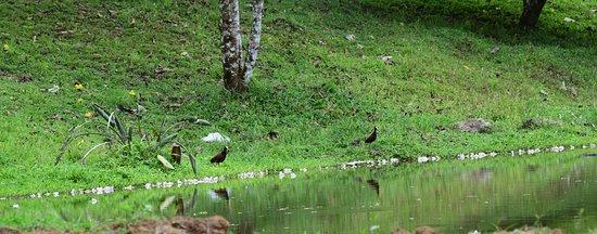 Katira, Costa Rica: LAGUNAS NATURALES
